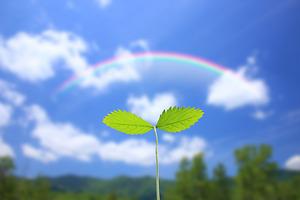 芽生え 虹