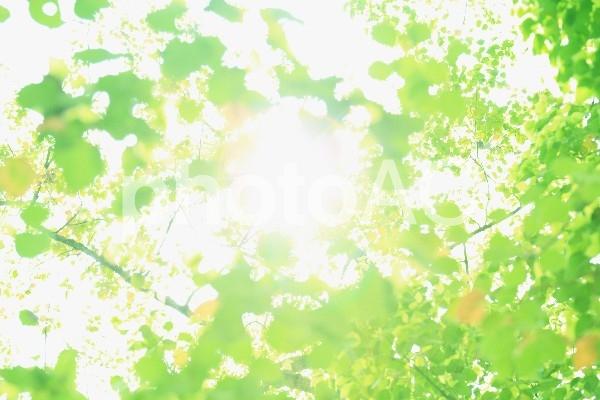 緑 日差し