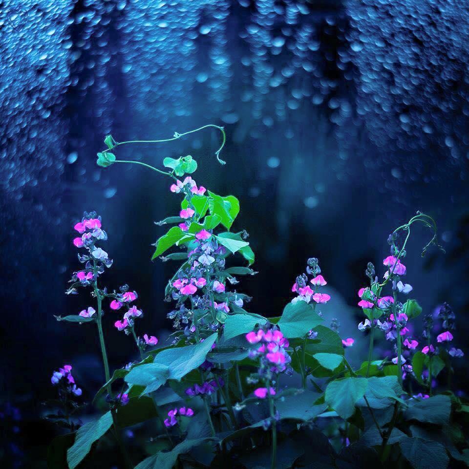 スピリチュアルな花