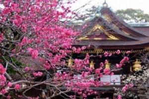 大阪京橋、福島の占いサロン観音庵のブログ画像 京都北野天満宮 梅花祭