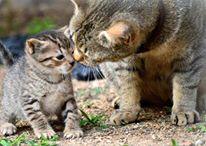 ネコの親子