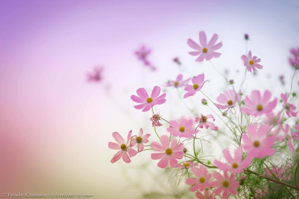 大阪福島の占いサロン観音庵のブログ 花