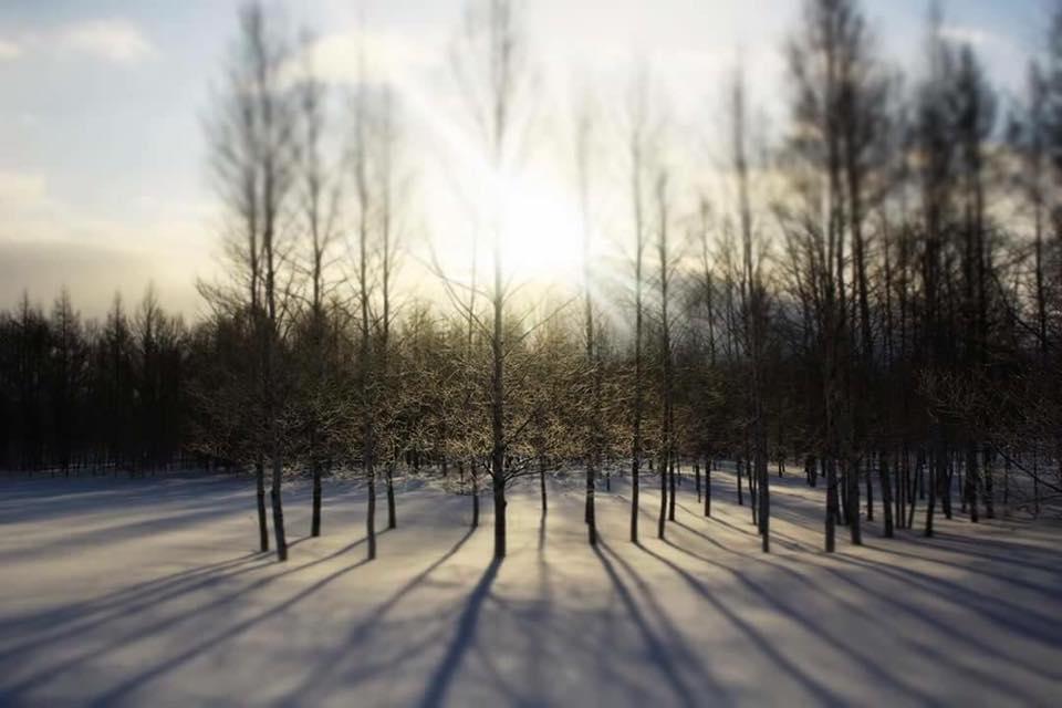 北海道の原生林