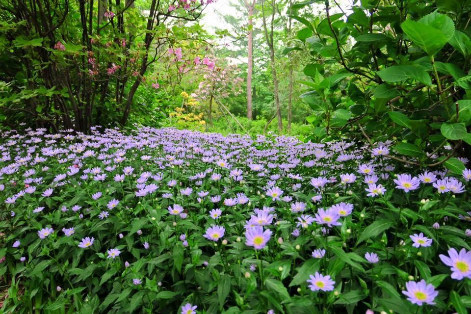森の中の花々