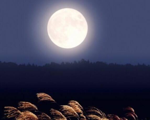 菩提お月さま2